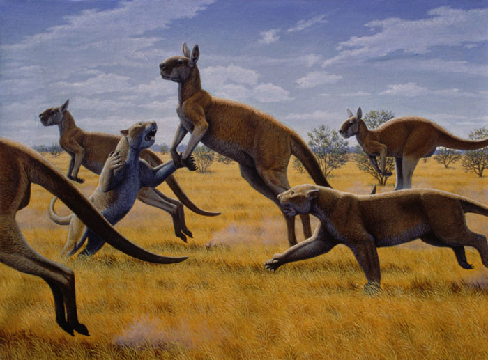 Extinction around the world 12 ジャイアントカンガルー、絶滅したはずの生物。
