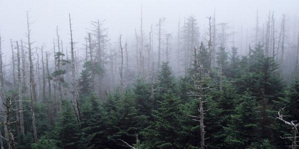 acid rain forest 600x300 大量絶滅は酸性雨が大きな要因か。