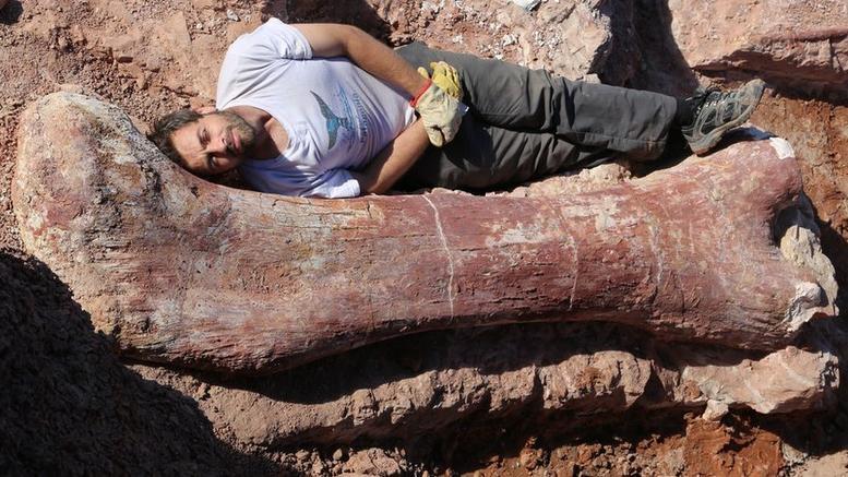 article3330 1400335756 w l 世界最大の恐竜の化石が発見される!正体はティタノサウルス!