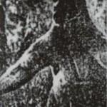 ジャイアントカンガルー、絶滅したはずの生物。