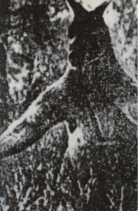 blogger image 179113851 ジャイアントカンガルー、絶滅したはずの生物。