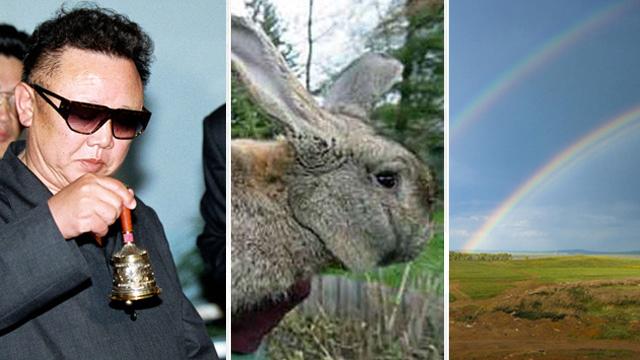 18k1cawv1h7gsjpg 巨大ウサギが食糧危機の救世主となるのか。