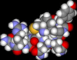 250px Arginine vasopressin3d 人が浮気をする理由。性格だけではない生物としての浮気。