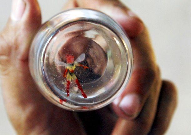 el hada de guadalajara 610x430 メキシコで捕獲された妖精!一般からは怪しいという指摘。