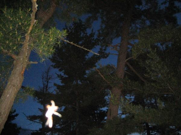fairy 5174 large detail june 211 ライト・ビーイング現象!写真に写る真実。