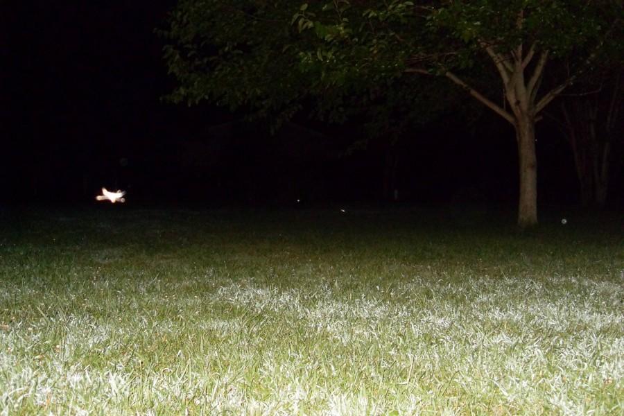 stuff 068 900x600 ライト・ビーイング現象!写真に写る真実。