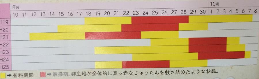 IMG 5070 900x276 彼岸花(曼珠沙華)が最盛期を迎える。埼玉県日高市巾着田。