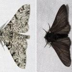 ロンドンの白い蛾。進化論を肯定する唯一の証拠。
