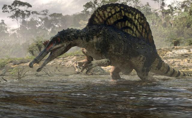 spinosaurus 1 スピノサウルスは泳いでいたという仮説が登場!