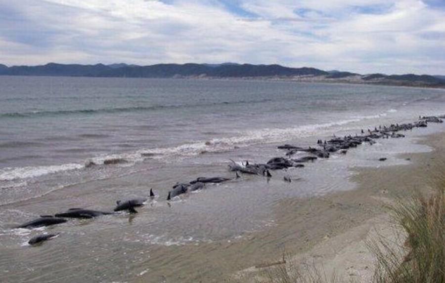 whalesdeath 900x573 海で大量の死骸が打ち揚げられる現象。原因は人間か。