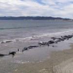 海で大量の死骸が打ち揚げられる現象。原因は人間か。