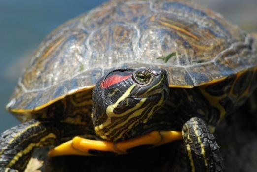 14 環境省が侵略的外来種のリストを作成。