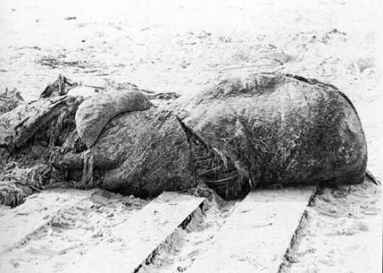 20061007201127st augustine carcass グロブスター。正体不明の漂着生物。
