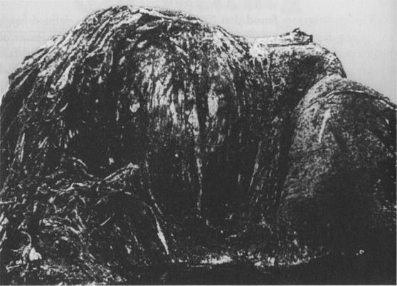 New Zealand Globster グロブスター。正体不明の漂着生物。