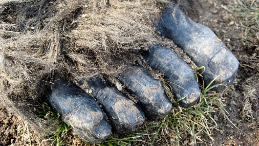 bigfoot 野生の人間。各地で目撃される獣人の正体か。