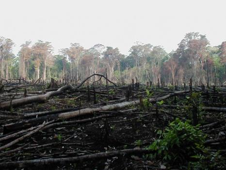 800px lacanja burn 熱帯雨林の乱開発。肉やエタノールの為に。