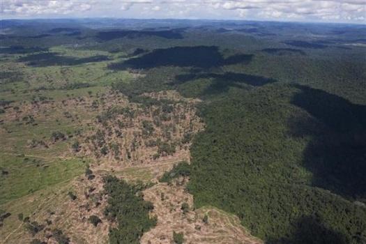 98d78b20cf504c02ca3707ff4eeba40d 熱帯雨林の乱開発。肉やエタノールの為に。