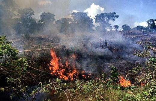 f6163e766135 熱帯雨林の乱開発。肉やエタノールの為に。